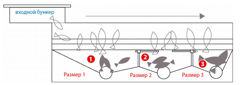 Вопросы и ответы по сортировщикам рыбы